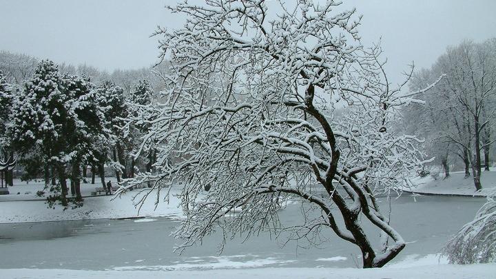 Зима, ты где? Центральная Россия осталась без снега и холодов