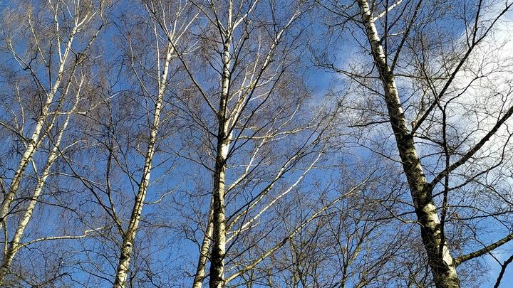 Солнце и +10: в Челябинске началось потепление