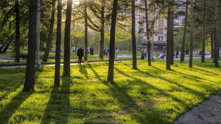 В Заксобрании НСО одобрили закон о защите городских лесов