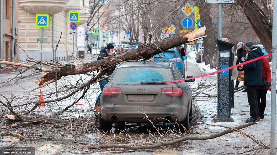 Сбой произошел наФилевской линии метро из-за упавшего напути дерева