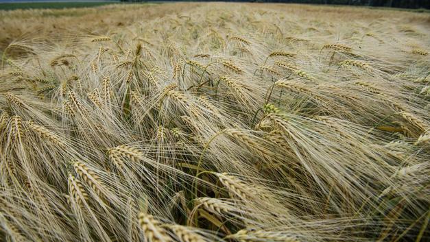 Запад позавидовал рекордному экспорту российских зерновых