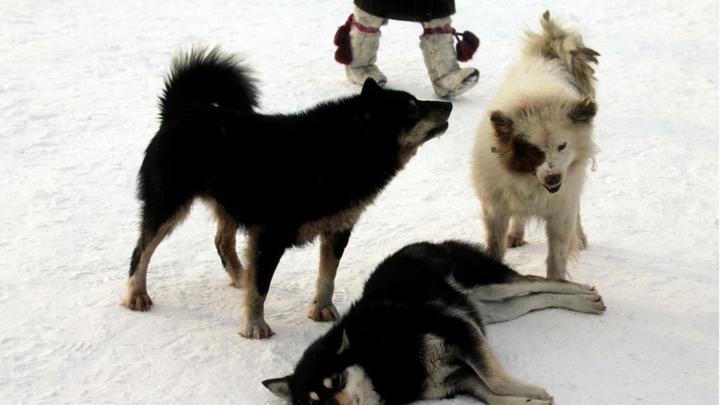 В Самаре отказались ловить бродячих собак