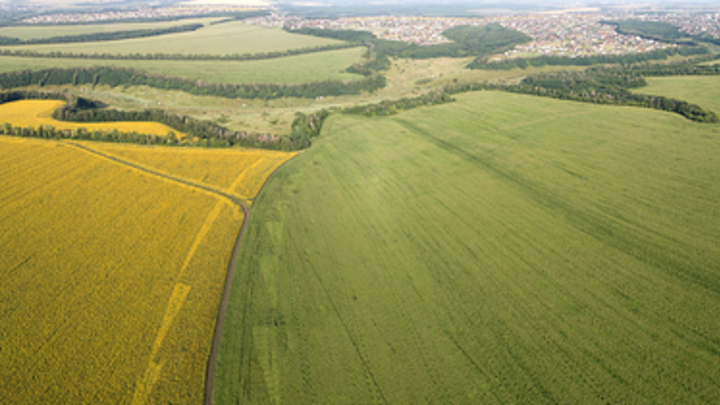 Во Владимирской области 14 гектаров сельхозземель заражены кишечной палочкой и энтерококками