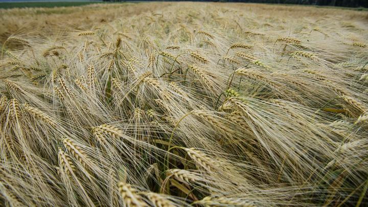 Знай наших: Опыт кубанских аграриев приедут перенимать австралийцы