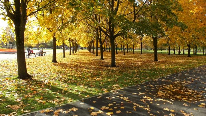 Погода в Подмосковье на 25 и 26 сентября: Золотая осень пришла