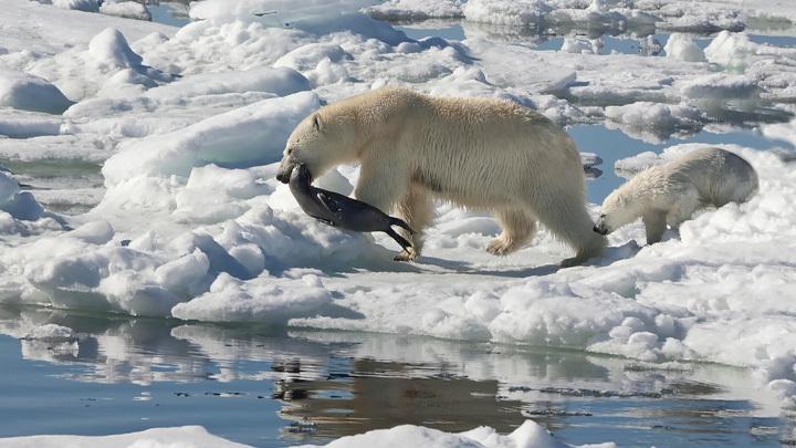 Флот НАТО пришёл за войной в Русскую Арктику