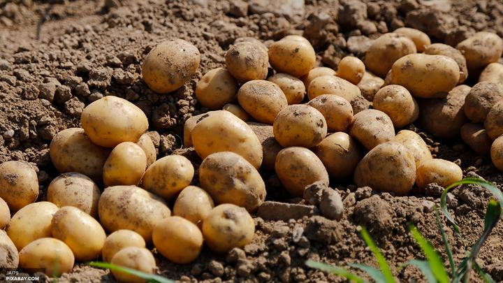 Из-за нехватки льготных кредитов Россия может остаться без урожая - Минсельхоз