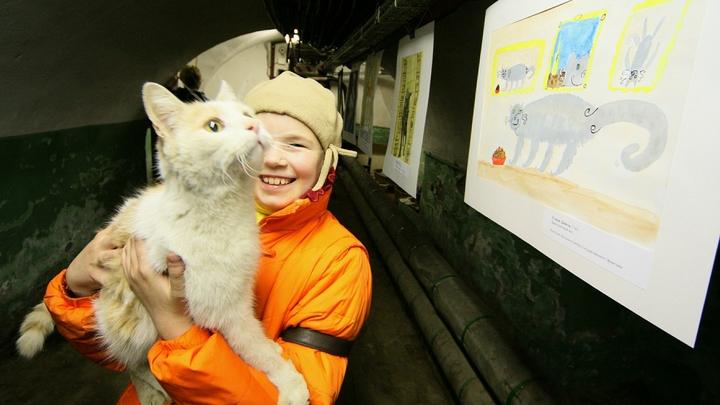 Эрмитаж опроверг информацию о гибели четырех музейных кошек