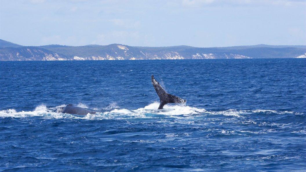 Спасателям удалось снять с мели застрявшего под Хабаровском кита
