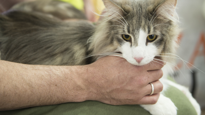 Всё равно что поцелуй: Стало известно, в каких случаях кошки медленно моргают