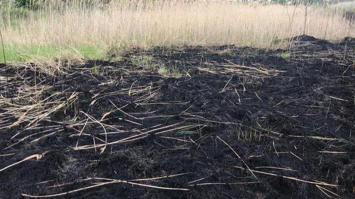 Гори оно всё огнём: Житель Волгодонска устроил масштабный пожар, решив выполнить работу за чиновников