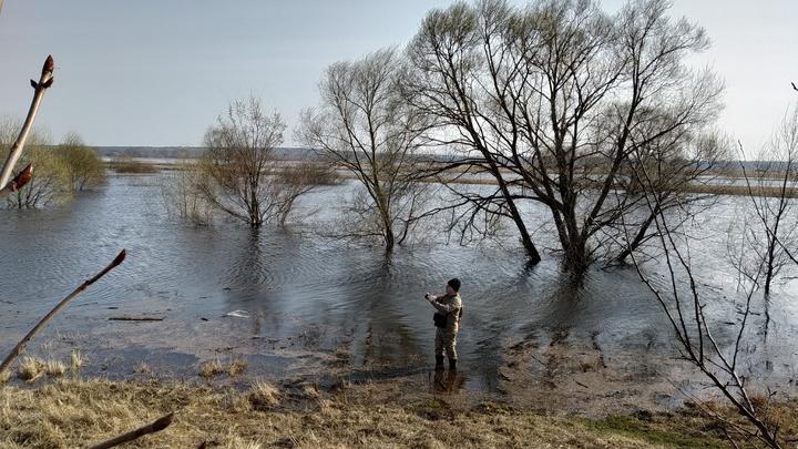 Паводок во Владимирской и Ивановской областях: Волга быстро прирастает, Клязьма вышла на пик