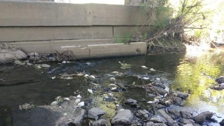 Берега реки в Челябинской области завалило мертвой рыбой