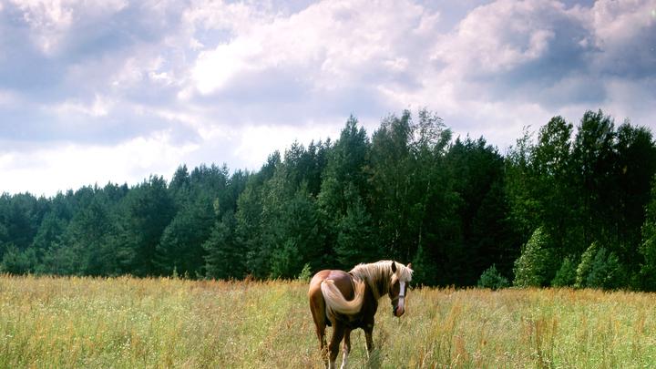 С манго и чили, очень вкусно: Наездница из США запекла своего любимого коня в духовке. И съела