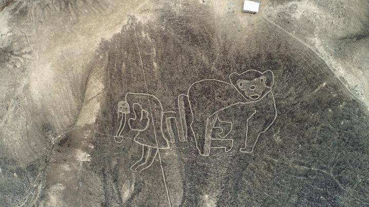 Огромного древнего котика обнаружили в пустыне - помогли современные технологии