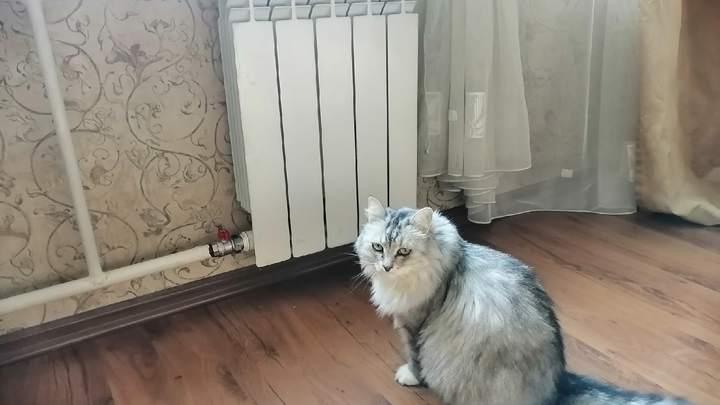 Отопление в дома Великого Новгорода в сентябре 2021 дадут раньше срока