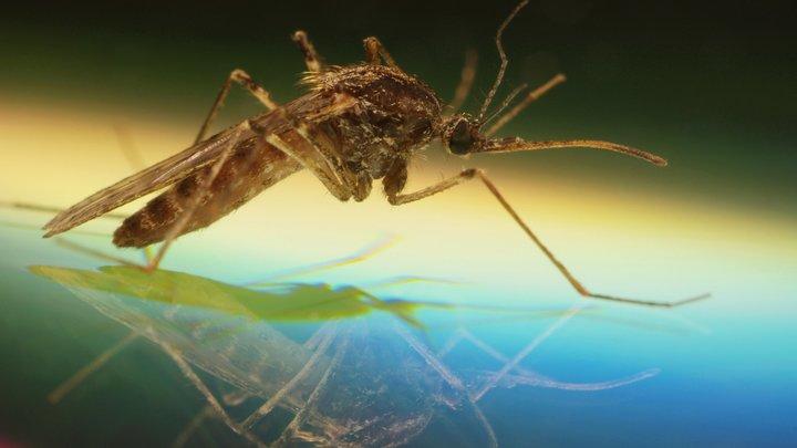 Смертельные комары на юге России - миф или реальность: Профессор МГУ объяснил ситуацию