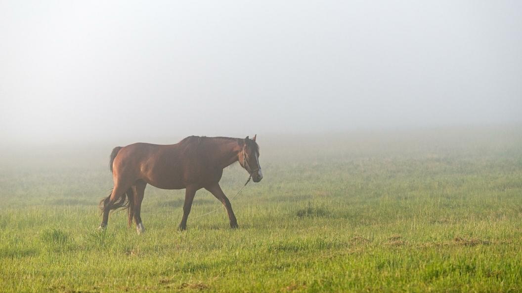 Конь убил копытом 6-летнего ребенка вНовосибирской области