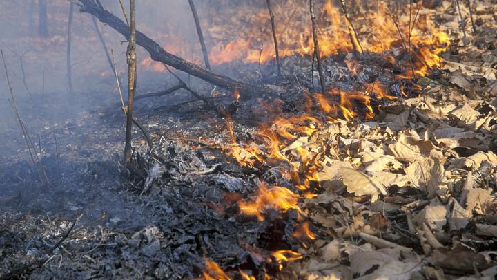 Лесные пожары уничтожают тысячи гектаров тайги