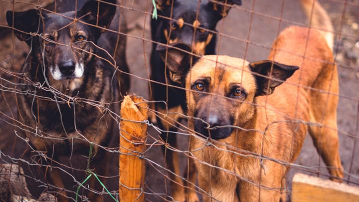 «Собаке – собачья смерть?»: Как в мире борются с бродячими псами