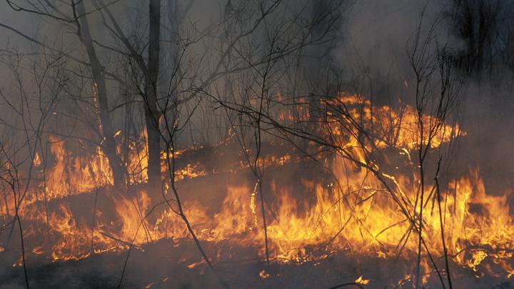 В Ильинском районе Ивановской области загорелся лес