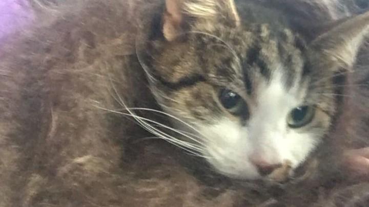 Хозяйка кошки Клепы винит зоозащитницу-шантажистку в внезапной смерти любимицы