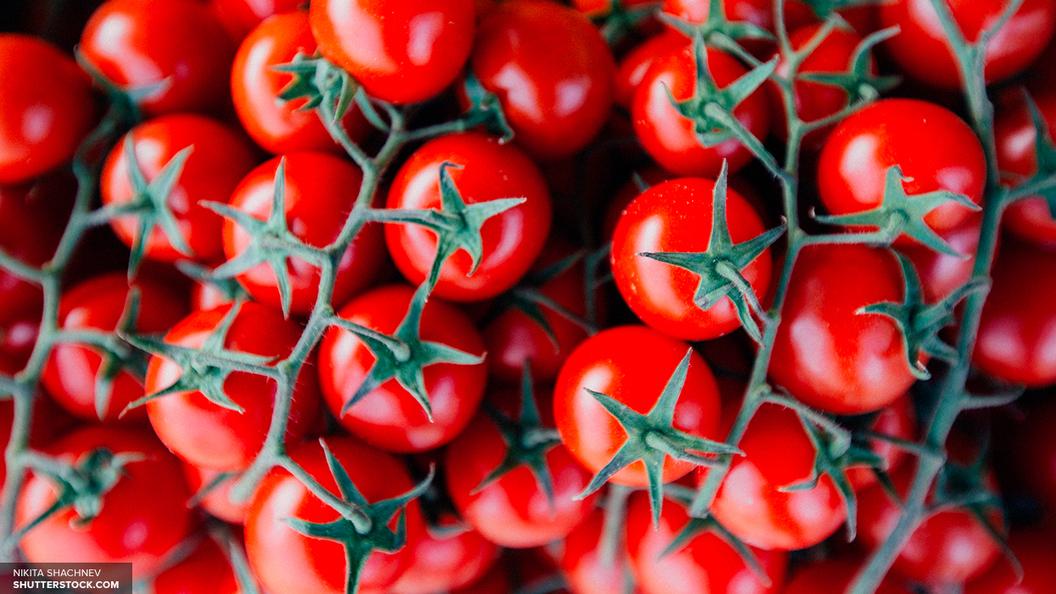 Россельхознадзор: Только три турецкие фирмы способны поставлять томаты в Россию