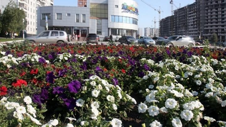 Не дарят - укради: компания читинцев совершила очередной набег на цветочные вазоны