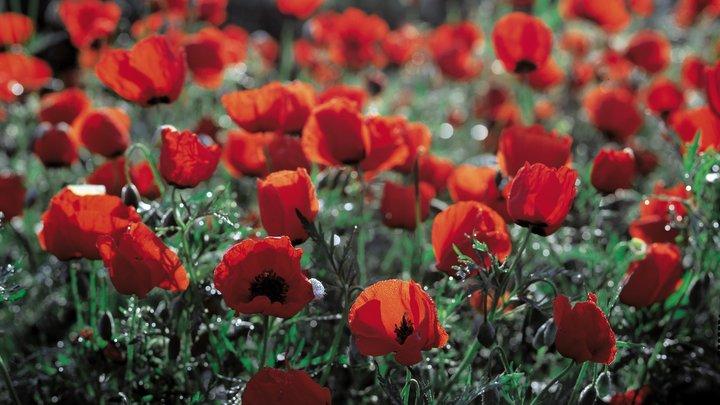 Пермскому ветерану дали год условно за сорный мак на его огороде