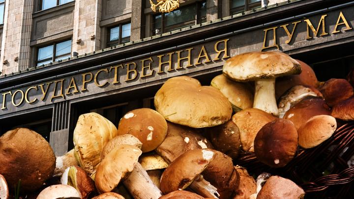 Выдержит ли Дума проверку грибами