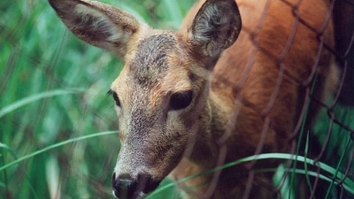 В Кургане браконьеры обстреляли егеря из охотничьего ружья