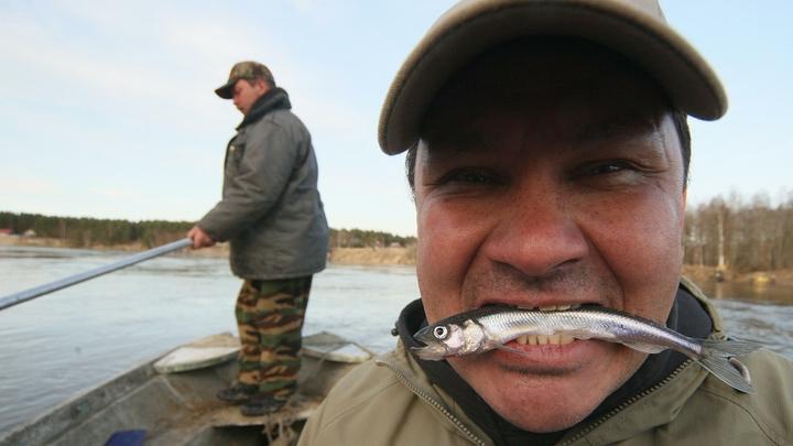В Новой Ладоге состоится один из самых известных рыбных фестивалей «Корюшка идет»