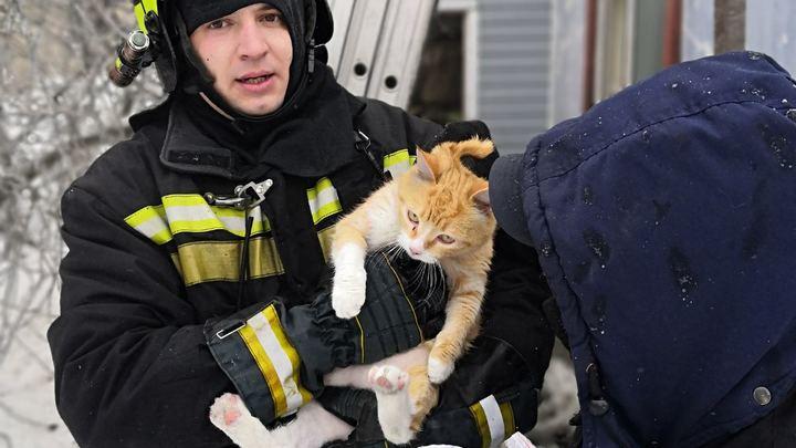 Гусевские пожарные спасли из огня двух котов