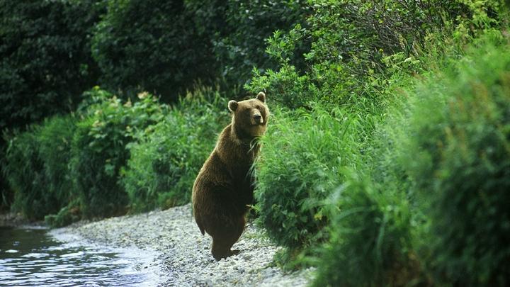 Офигеть, медведь!: В Бурятии возле роддома сняли необычного посетителя