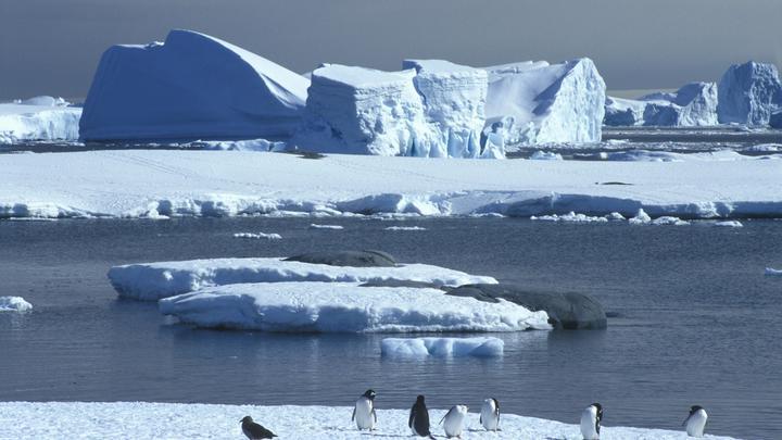 Экстремальный спортсмен отметил 200-летие открытия Антарктиды заплывом во льдах