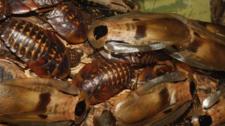 Как не стать жертвой нашествия тараканов? Энтомолог дал четыре совета