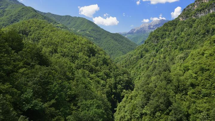 Черногорию потрясла жестокая расправа над украинской миллионершей