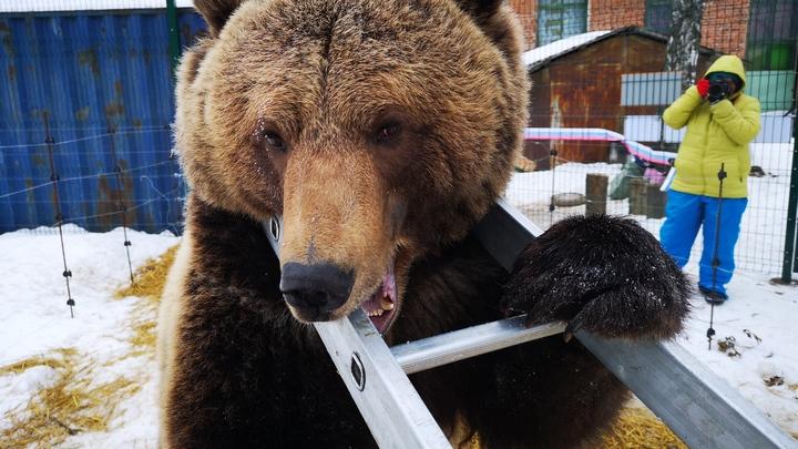 Началась паника! Разъярённый медведь кинулся на дрессировщика - мужчину отбивали голыми руками и шокером