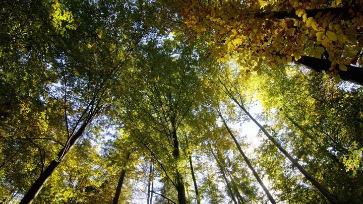 Вместо олимпиады пошла в лес: Телефон отличницы нашли в деревьях. Её нигде нет