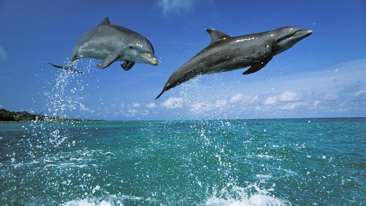 Дельфинов в Чёрном море стало меньше в десятки раз. Зато появилось 200 мусорных островов