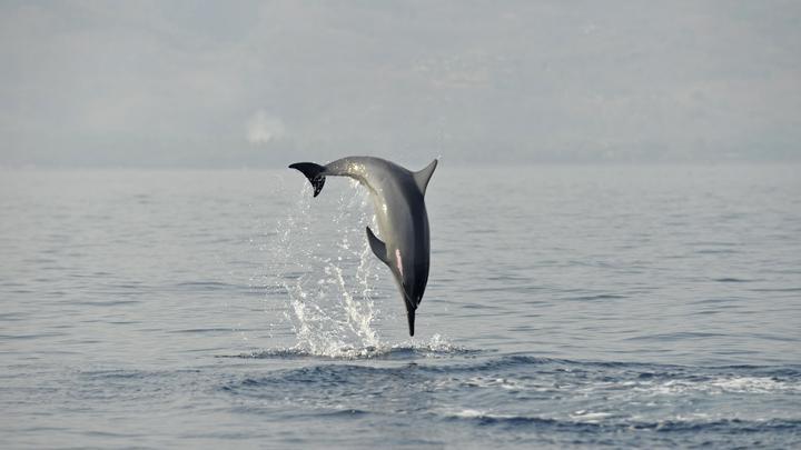Почти 20 дельфинов погибло из-за небрежности НАТО в ходе учений Северные берега - Der Spiegel