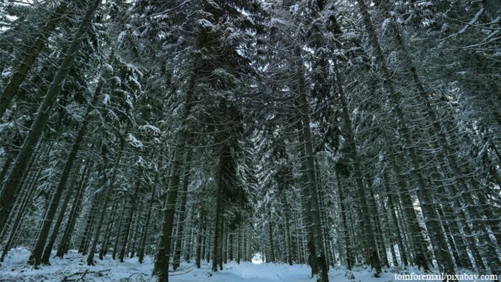 Житель Ивановской области на снегоходе нашел ручей с 100 килограммами рыбы