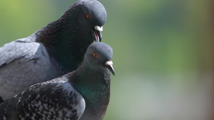 Под Новосибирском мужчина разбился во время охоты на голубей