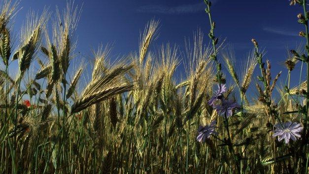 Основной объем зерна на экспорт вывезут из Ростова-на-Дону до ЧМ-2018