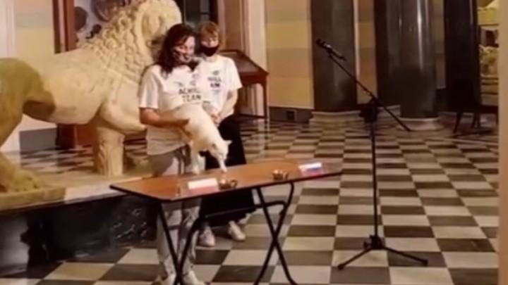 Петербургский кот-оракул впервые ошибся