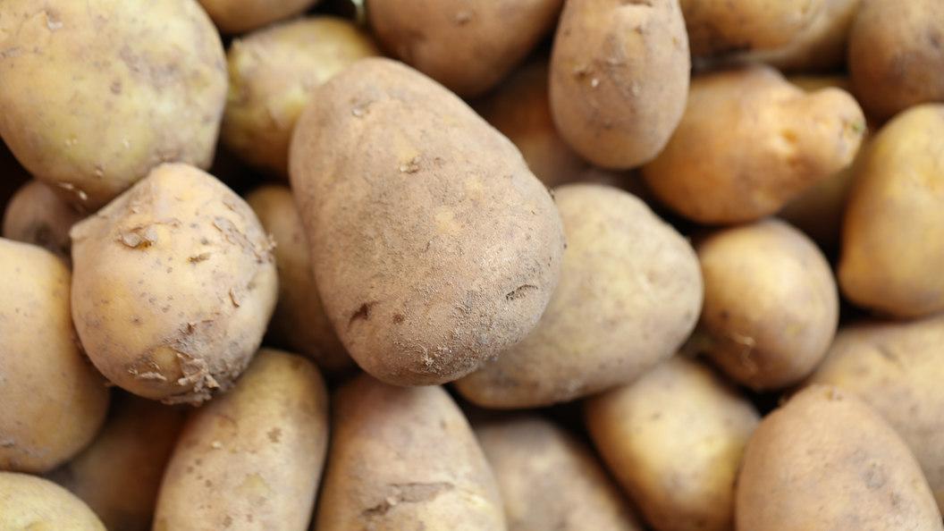 293-й день рождения Евы Экеблад, создавшей коньяк из картофеля
