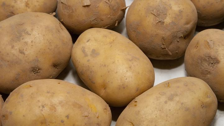 От тошноты до смерти: В «Ашане», «Пятерочке» и «Дикси» нашли картофель с кадмием