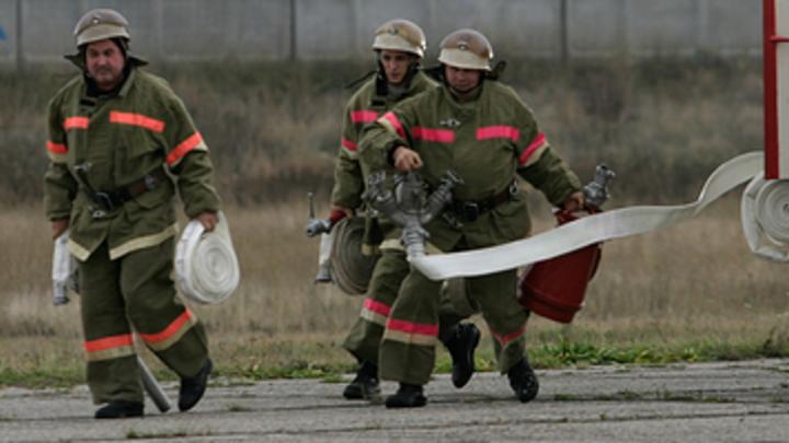 Животным не дали сгореть: В Грозном пожарные спасли жизни 170 кошкам и собакам
