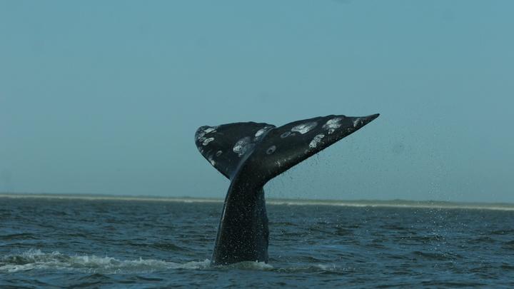 Больше 100 стаканов, 4 бутылки и шлепанцы: Содержание желудка кита удивило экологов