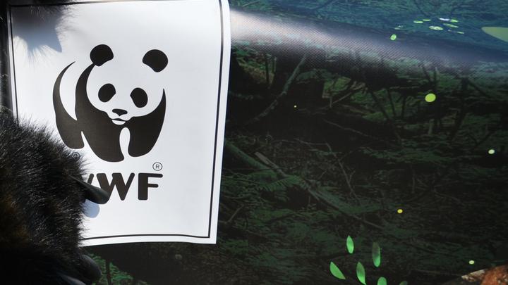 Защитников дикой природы обвинили в организации пыток и убийств